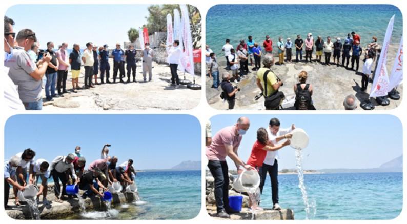Datça Kıyılarından Denize 20 bin Yavru Balık Salımı Gerçekleştirildi